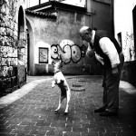 Il cane salta addosso